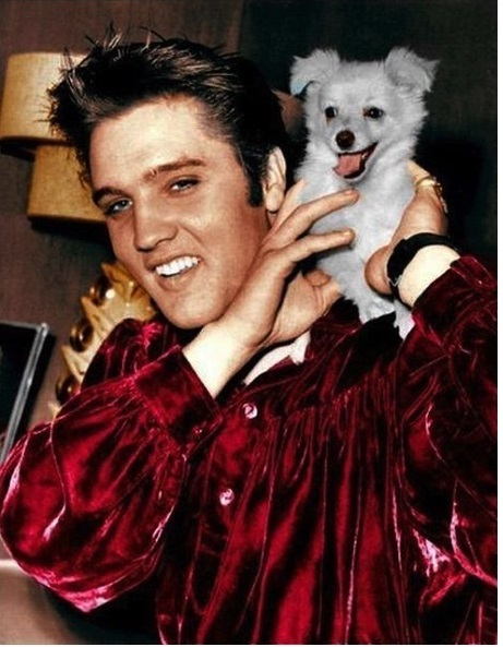 Elvis with sweet puppy 1950's