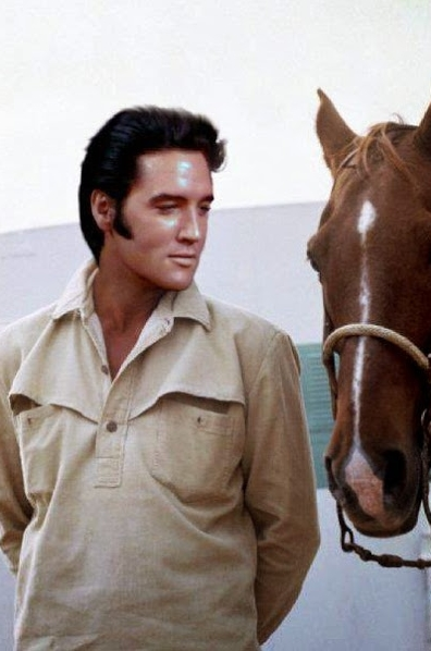 Elvis with horse photo GORGEOUS